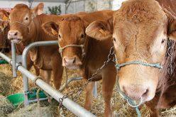 L'élevage, un investissement rentable ?