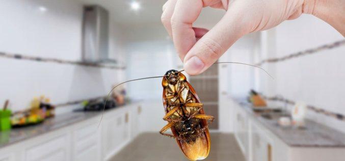 Comment se débarrasser des insectes dans sa maison située à Cannes ?