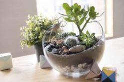 Loisir décoratif : créer son propre terrarium