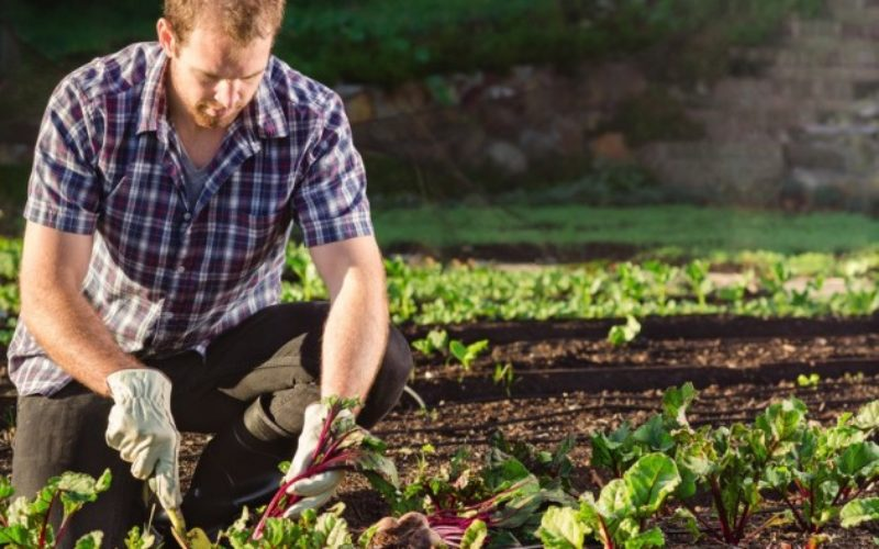 Jardiner en dépit des douleurs