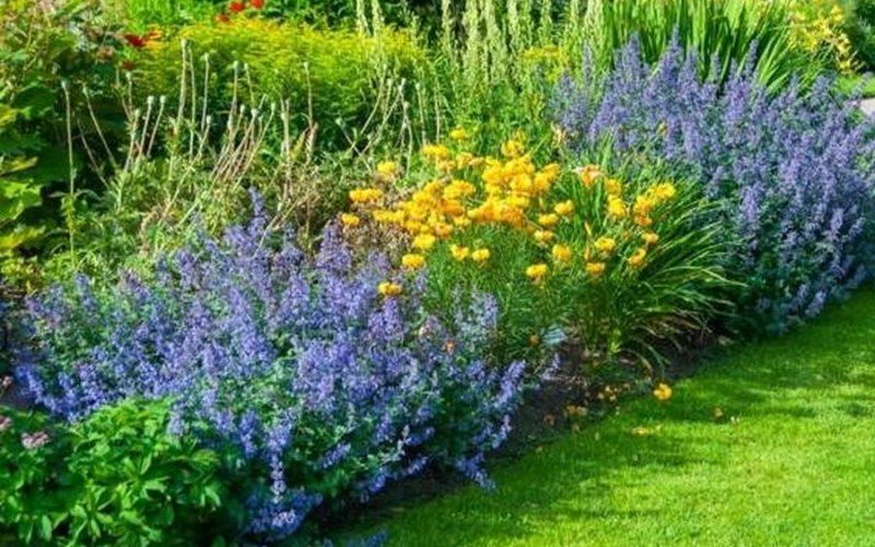Pelouse et plantes en été